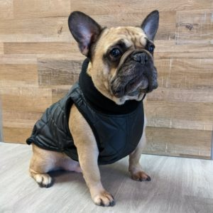 2020 Monaco Coat for French Bulldogs - Black