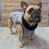 2020 Monaco Coat for French Bulldogs - Grey