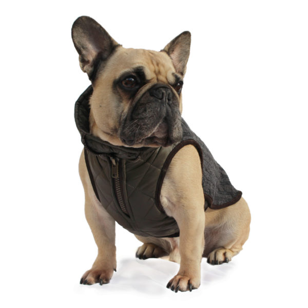 Windsor Knit for French Bulldog