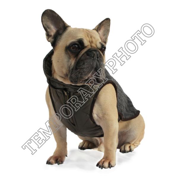Windsor Knit for Bulldogs
